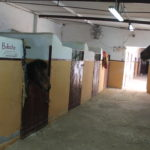Pupilaje caballos Madrid